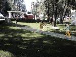 Uso del espacio público_ Contaduría y Administración